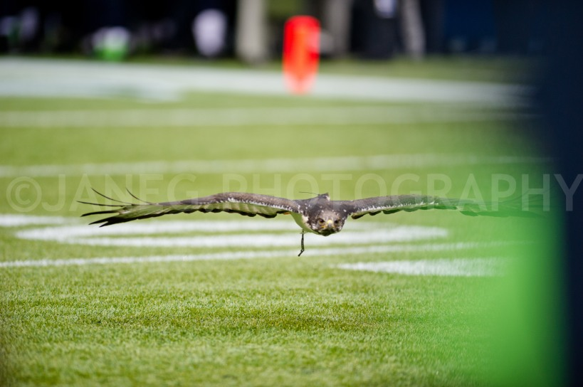 20121209Seahawks_Cardinals-26